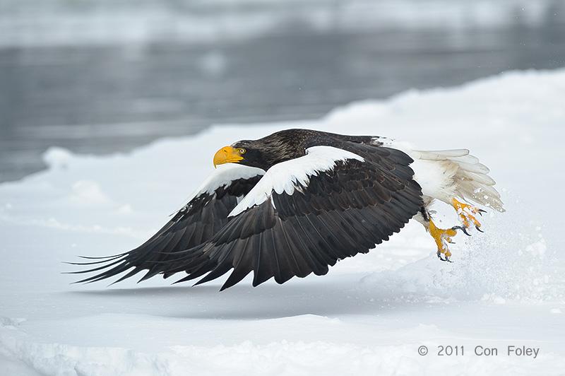 Hokkaido Winter Birds
