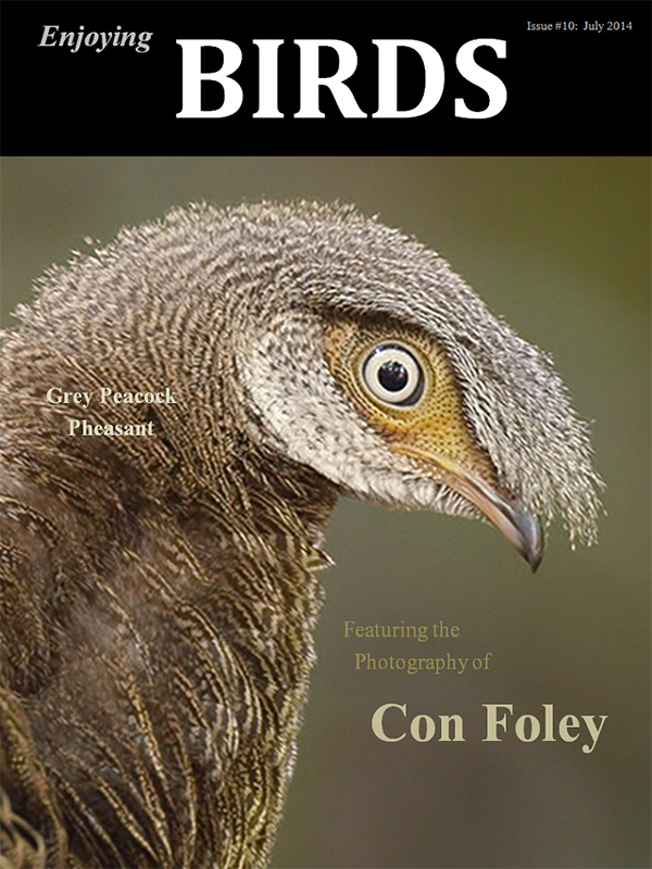 Enjoying Birds Issue #10, July 2014